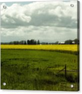 The Curve Of A Mustard Crop Acrylic Print