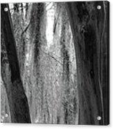 Cypress In The Bayou Acrylic Print