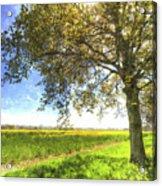 The Daffodil Summer Farm Art Acrylic Print