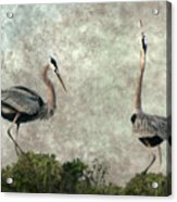The Dance Of Life - Great Blue Herons In Mating Ritual - Digital Painting Acrylic Print