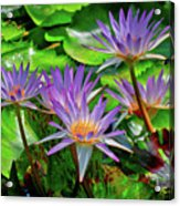 The Dance Of The Lillies Acrylic Print