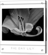The Day Lily Poster Acrylic Print
