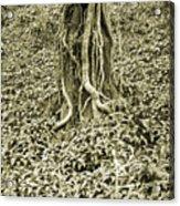 The Deep Dark Woods Acrylic Print