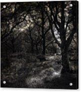 The Deep Forest Acrylic Print