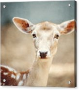 The Deer Acrylic Print