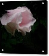 The Disappearing Flower  Acrylic Print
