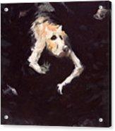 The Diving Dog Acrylic Print