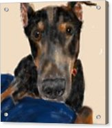 The Doberman Acrylic Print