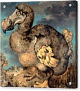 The Dodo, 1651  Acrylic Print