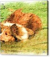 The Dog Paddle Acrylic Print
