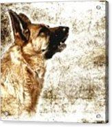 The Dog Speaks Acrylic Print