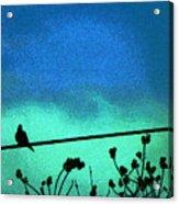 The Dove Above 2 Acrylic Print