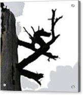 The Dragon Tree Acrylic Print