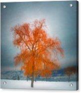 The Dreams Of Winter Acrylic Print
