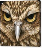 The Dubious Owl Acrylic Print