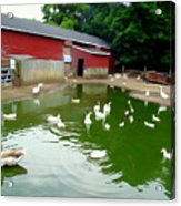 The Duck Pond Acrylic Print