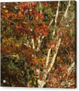 The Dying Leaves' Final Passion Acrylic Print