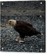 The Eagle And Its Prey Acrylic Print