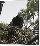 The Eagle Eye Acrylic Print