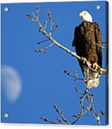 The Eagle Has Landed Acrylic Print
