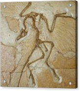 The Earliest Bird, Archaeopteryx Acrylic Print by Jason Edwards