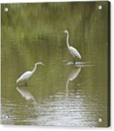 The Egret Pond Acrylic Print