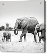 The Elephant Family Acrylic Print
