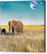 The Elephant Herd Acrylic Print