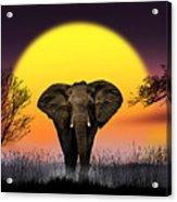 The Elephant Acrylic Print