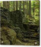 The Enchanted Forest Acrylic Print