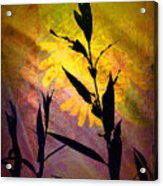 The End Of Summer Acrylic Print