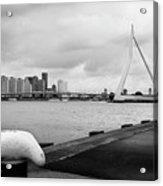 The Erasmus Bridge In Rotterdam Bw Acrylic Print
