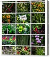 The Essential Thai Garden II Acrylic Print