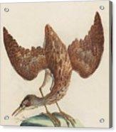 The Eurasian Bittern Or Great Bittern Acrylic Print