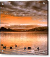 The Evening Geese Acrylic Print