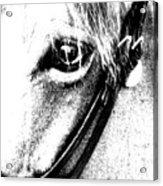 The Eye Of The Horse Acrylic Print