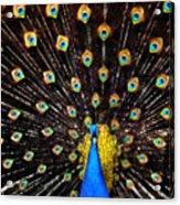 The Eyes Have It Acrylic Print by Joe Bonita