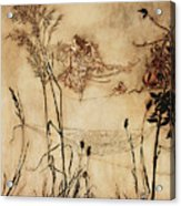 The Fairy's Tightrope From Peter Pan In Kensington Gardens Acrylic Print by Arthur Rackham