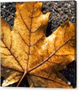 The Fall Of Autumn Acrylic Print