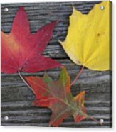 The Fallen Leaves Of Autumn Acrylic Print