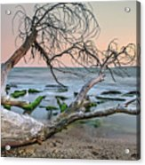 The Fallen Tree Acrylic Print