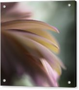 The Feathery Kisses In My Dreams Acrylic Print