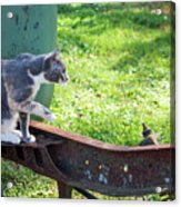 The Ferals-1424 Acrylic Print