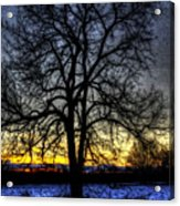 The Field Tree Hdr Acrylic Print