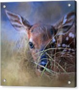 The First Fawn Acrylic Print