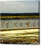 The Flamingoes Acrylic Print