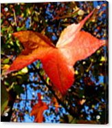 The Flavor Of Fall Acrylic Print