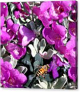 The Flight Of The Bumble Bee Acrylic Print