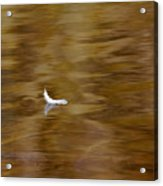 The Floating Feather Acrylic Print