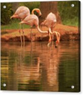The Flock - The Serenity Of Flamingos At Water's Edge Acrylic Print
